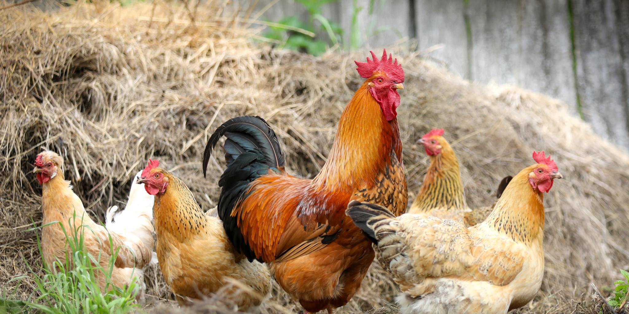 Home Farming - mehr als ein Trend!