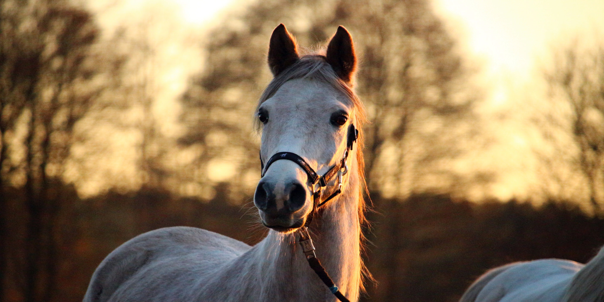 Gesundes Pferd = glückliche Reiter/in!