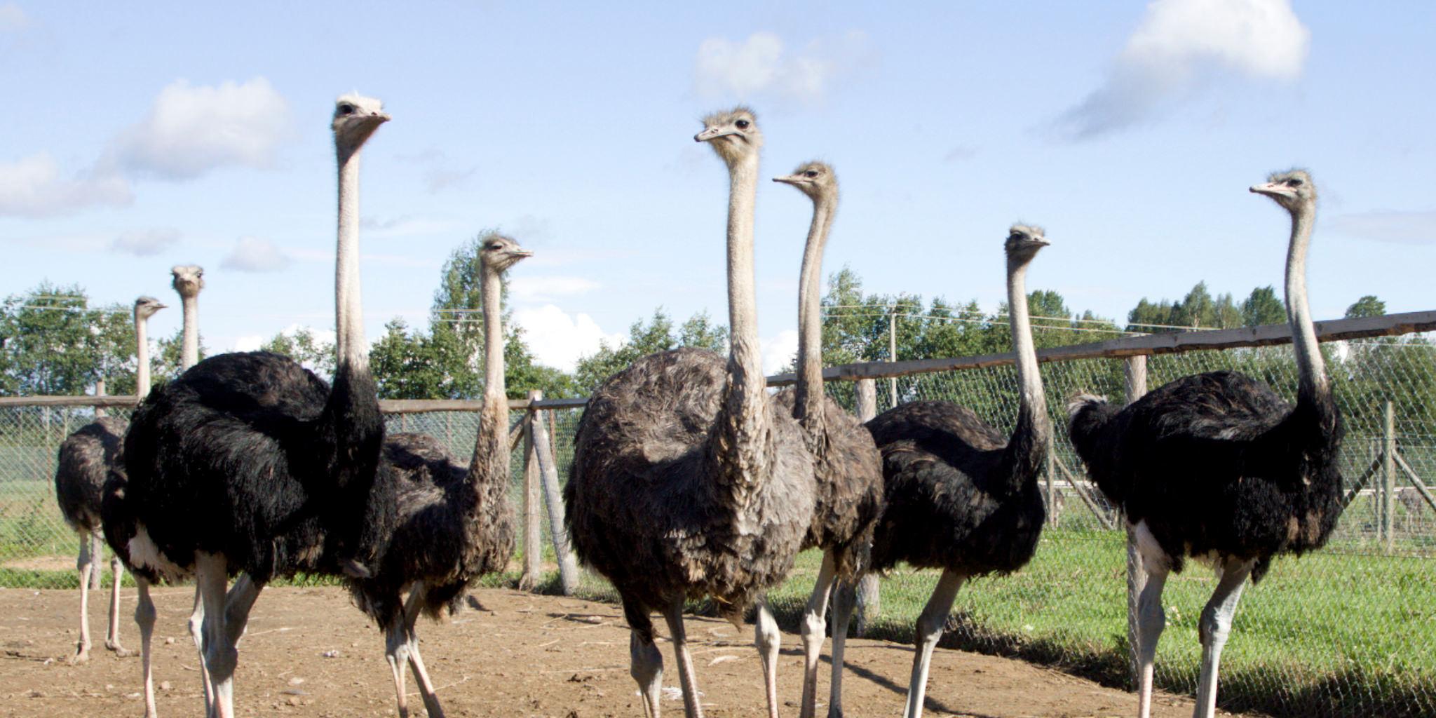 Vögel artgerecht füttern